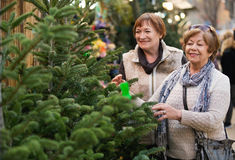 Happy smiling elderly women selecting spruce Royalty Free Stock Image