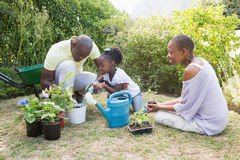 Happy smiling family plant a flowers together Stock Image