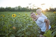 Happy smiling father with son on his back walks on the green field of blooming sunflowers at sunset stock images