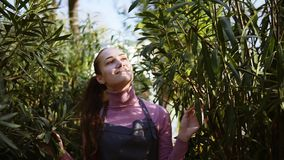 Happy smiling female gardener in apron touching leaves of different trees while walking among rows of trees in a garden. Or greenhouse stock video footage