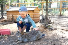 Happy and smiling little boy stroking a rabbit royalty free stock photos