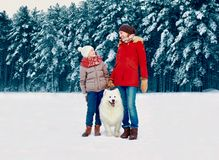 Happy smiling mother and son child walking together with white Samoyed dog in snowy winter day royalty free stock images