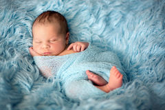 Happy smiling newborn baby in wrap, sleeping happily in cozy fur. Happy smiling newborn baby in wrap, sleeping happily in cozy blue fur, cute infant baby Royalty Free Stock Photography