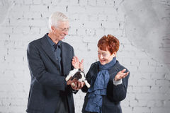 Happy smiling old couple standing together with pet rabbit on white brick background. Royalty Free Stock Images