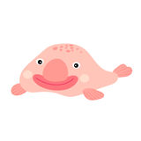 Happy smiling pink deep sea Blobfish cartoon character. Royalty Free Stock Images