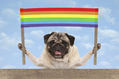 Happy smiling pug puppy dog with colorful rainbow banner sign. On blue sky background stock image