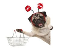 Happy smiling pug puppy dog, holding up shopping basket, wearing diadem with red sale sign. Isolated on white background stock images