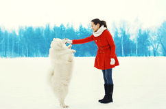 Happy smiling young woman owner with white Samoyed dog playing walking in winter Stock Images