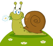 Happy snail with a flower Stock Photos