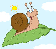 Happy snail on a leaf Royalty Free Stock Image