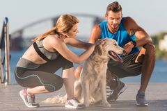 Sports couple with dog. Happy sports couple with golden retriever dog in city at daytime Stock Photography