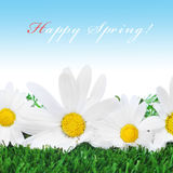 Happy spring Royalty Free Stock Photos