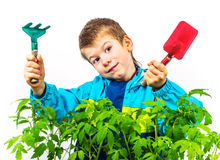 Happy spring gardening boy Stock Photography