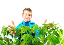 Happy spring gardening boy Royalty Free Stock Images