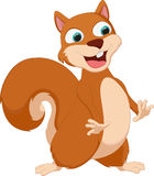 Happy squirrel cartoon Stock Image