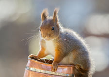 Happy squirrel Stock Images