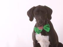 Happy St. Patricks Dane Stock Image