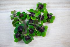 Happy st patricks day, luck clover Royalty Free Stock Photography