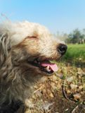 Happy stray dog. In the field Stock Photo