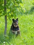 Happy stray dog having rest Stock Image