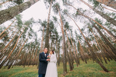 Happy stylish newlywed couple posing in the young pine forest with high conifer trees at background Stock Images
