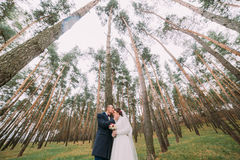 Happy stylish newlywed pair posing in the young pine forest. Groom gently kissing his pretty bride Royalty Free Stock Image