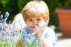 Happy summer boy. Kids smile. Rest on the lavender fields. Summer holidays. Fresh lavender scent. Lavandula background royalty free stock image