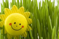 Happy sun. Yellow happy sun in the grass Royalty Free Stock Photo