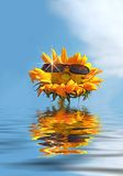 Happy Sunflower on Vacation. A fun Summer Vacation Concept Stock Images