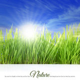 Happy sunny day with grass Royalty Free Stock Photo