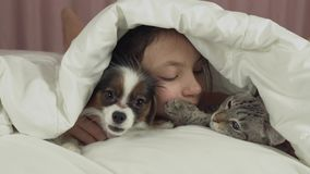 Happy teen girl communicates with dog Papillon and Thai cat in bed stock footage video stock footage