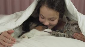 Happy teen girl communicates with dog Papillon and Thai cat in bed stock footage video stock video footage