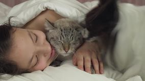 Happy teen girl playing with dog Papillon and Thai cat in bed stock footage video stock video