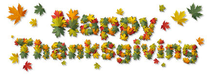 Happy Thanksgiving Autumn. Text on a white background as a fall harvest symbol with leaves shaped as type as a seasonal holiday message in a 3D illustration Royalty Free Stock Photo