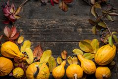 Happy Thanksgiving Background. Autumn Harvest and Holiday border. Selection of various pumpkins on dark wooden background. Autumn vegetables and seasonal royalty free stock images