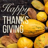 Happy Thanksgiving Background. Autumn Harvest and Holiday border. Selection of various pumpkins on dark wooden background. Autumn. Happy Thanksgiving Background royalty free stock photo