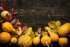 Happy Thanksgiving Background. Autumn Harvest and Holiday border. Selection of various pumpkins on dark wooden background. royalty free stock image