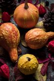 Happy Thanksgiving Background. Selection of various pumpkins on dark metal background. Autumn Harvest and Holiday still life. Autumn vegetables royalty free stock photos