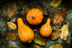 Happy Thanksgiving Background. Selection of various pumpkins on dark metal background. Autumn Harvest and Holiday still life. Autumn vegetables stock photos