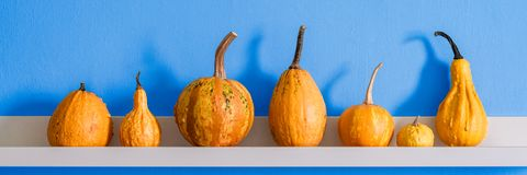 Happy Thanksgiving Background. Selection of various pumpkins on white shelf against bright blue wall. Modern room decoration. Happy Thanksgiving Background stock images