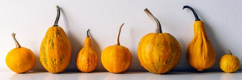 Happy Thanksgiving Background. Selection of various pumpkins on white shelf against white wall. Modern seasonal room decoration. Pumpkins banner. Minimalism royalty free stock photos