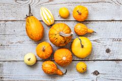Happy Thanksgiving Background. Selection of various pumpkins on white wooden background. Autumn vegetables and seasonal decoration. S. Autumn Harvest and Holiday stock photo