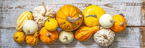 Happy Thanksgiving Banner. Selection Of Various Pumpkins On Old White Wooden Background. Autumn Vegetables And Seasonal Decoration Royalty Free Stock Image