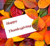 Happy Thanksgiving card Royalty Free Stock Image