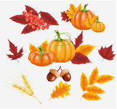 Happy Thanksgiving celebration background. Pumpkin, leaves, Rowan Berries, acorns. Royalty Free Stock Photography