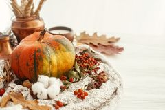 Happy Thanksgiving concept. Pumpkin, candle, fall leaves, berrie. S, nuts, acorns, cotton, cinnamon on sweater and rustic white wood. Seasons greetings. Cozy stock photos
