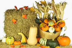 Happy Thanksgiving Day. Picture of bale of hay and assorted pumpkins, squashes, gourds, corncobs and falls from the trees leaves traditional decoration for Royalty Free Stock Image