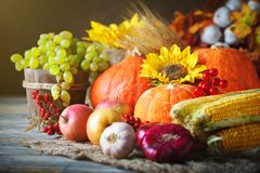 Happy Thanksgiving Day background, wooden table decorated with Pumpkins, Maize, fruits and autumn leaves. Harvest stock photo
