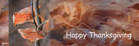 Happy Thanksgiving day. With beautiful coloured autumn leaves and autumn background stock photo
