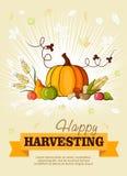 Happy Thanksgiving Day celebration flyer Royalty Free Stock Photos